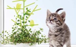 Von der Vereinbarkeit von Haustieren und Zimmerpflanzen