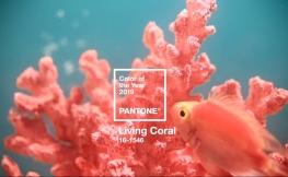 Pantone enthüllt die Trendfarbe des Jahres 2019