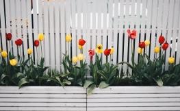 Zäune – mehr als nur Sichtschutz