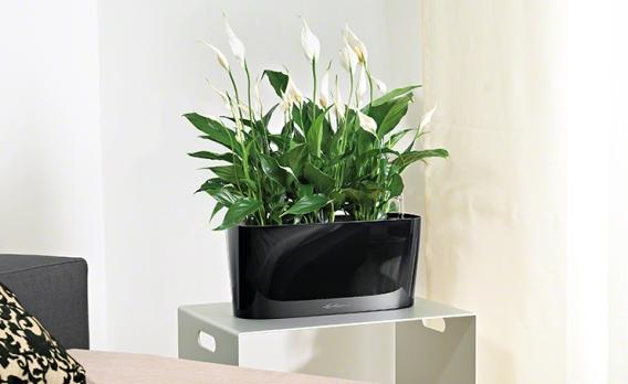 große pflanzen wohnzimmer ? elvenbride.com - Grose Wohnzimmer Pflanzen