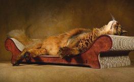 Möbel für Katzen
