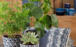 Warum Pflanzen in der Wohnung sinnvoll sind
