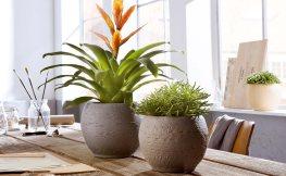 Hydropflanzen und Raumklima – die optimale Symbiose