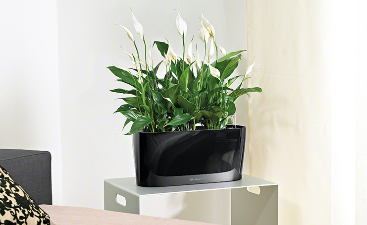 moderne wohnzimmer pflanzen haus design ideen
