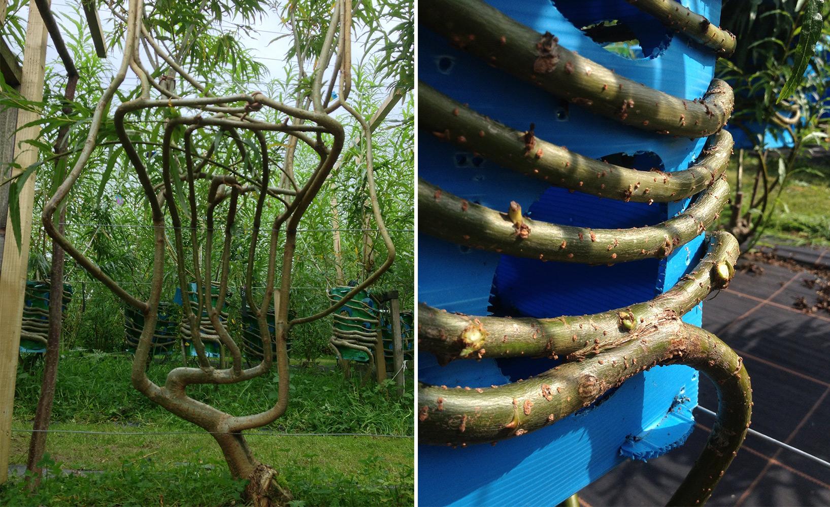 Einfache Dekoration Und Mobel Natuerlich Wohnen Mit Wachsenden Moebeln #19: Wachsende Möbel