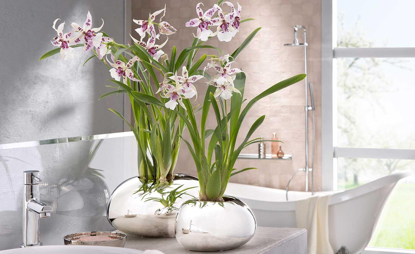 warum zimmerpflanzen in jeder wohnung immer sinnvoll sind. Black Bedroom Furniture Sets. Home Design Ideas