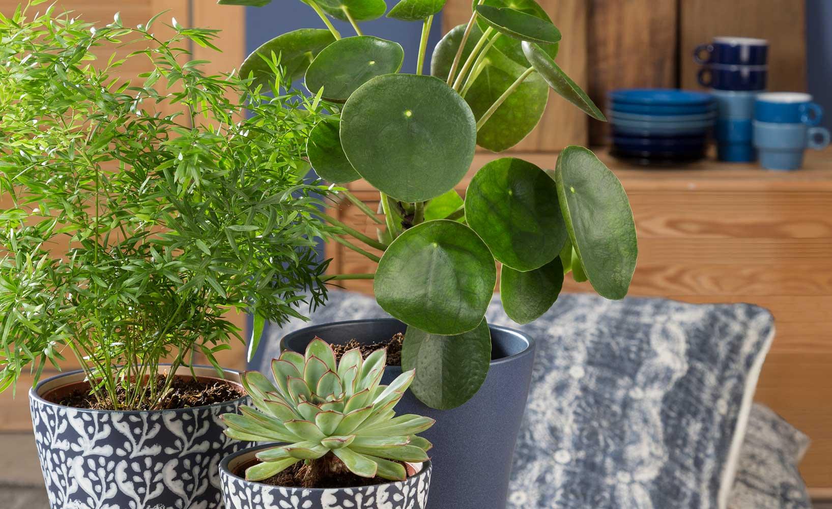 warum zimmerpflanzen in jeder wohnung immer sinnvoll sind On pflanzen in der wohnung