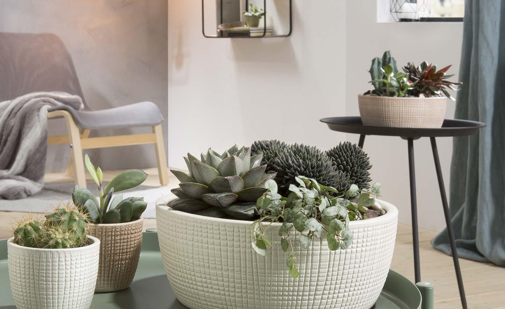 von der vereinbarkeit von haustieren und zimmerpflanzen. Black Bedroom Furniture Sets. Home Design Ideas