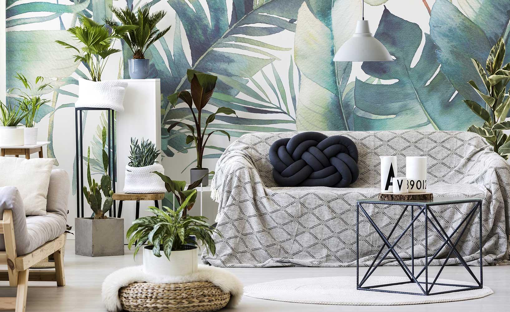 Zimmerpflanzen ? Dekoration für Fortgeschrittene
