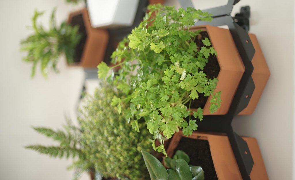 Zimmerpflanzen während der Urlaubszeit versorgen